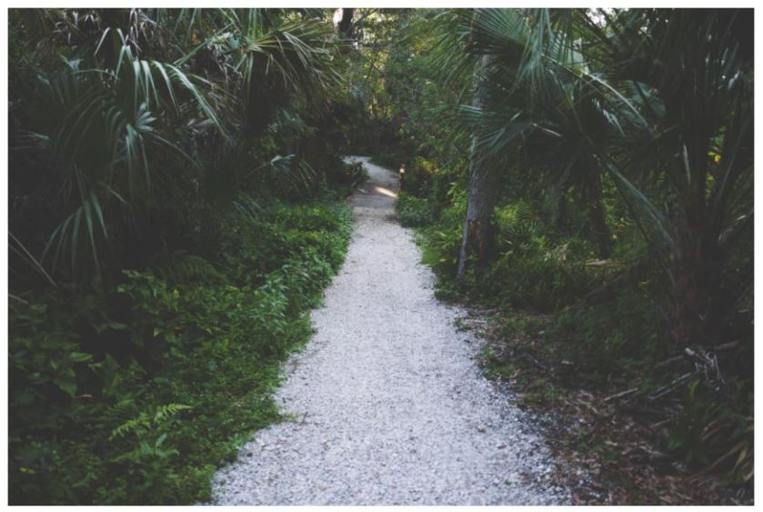 Lovely path in a tropical setting. Photo - Drew Coffman, John R. Bonner Park, Largo Florida, amid home, palm trees, pea gravel, shady lane, flashes of delight, down the road, tropical