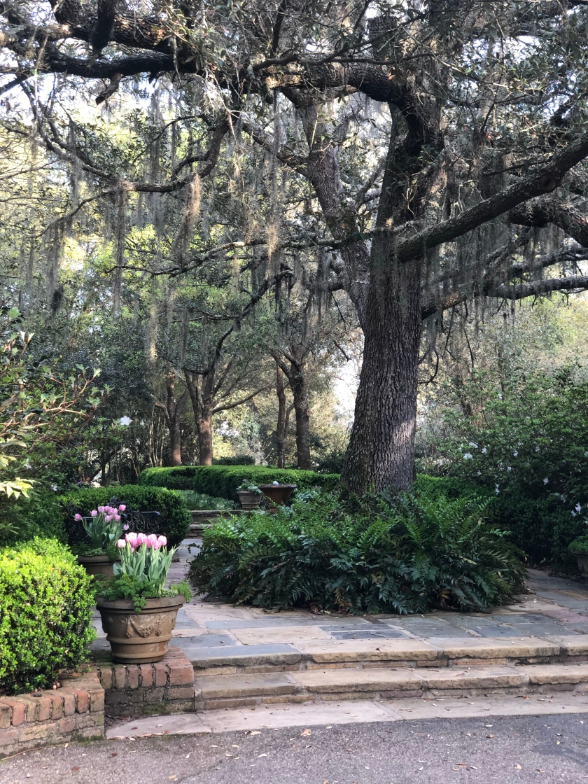 Bellingrath Gardens. A flagstone terrace with oak trees, boxwoods, and planters of tulips. Amid Home, Theodore, Alabama, Mobile, spanish moss, old southern plantations, historic estate homes, national register of historic places, gardenista, southern living, live oak, ferns, pea gravel, crushed gravel, landscape, paradise, fowl river, azaleas, camellias, japonica, sasquanna, wisteria, white wisteria, japanese gardens, asian american gardens